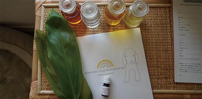 ハワイアンドッグアロマセラピー   Hawaiian dog aromatherapy